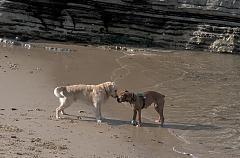 Jeux de chiens 3